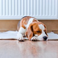 Müder Hund wegen Hitze
