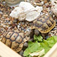 Schildkröten im Wintergarten