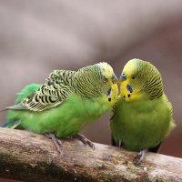Sonnenschutz für Ziervögel